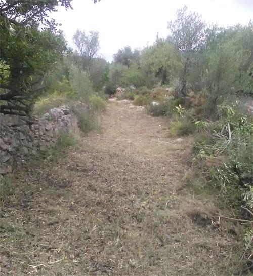 Rossell, la Mancomunitat de la Taula del Sènia neteja la roureda de la Bonanina