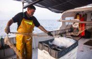 Peníscola, arrenquen les primeres experiències Pesca Turisme de la Comunitat