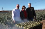 Benicarló presenta de forma oficial la 25a Festa de la Carxofa