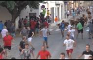 Càlig, l'entrada de bous atreu a milers de persones