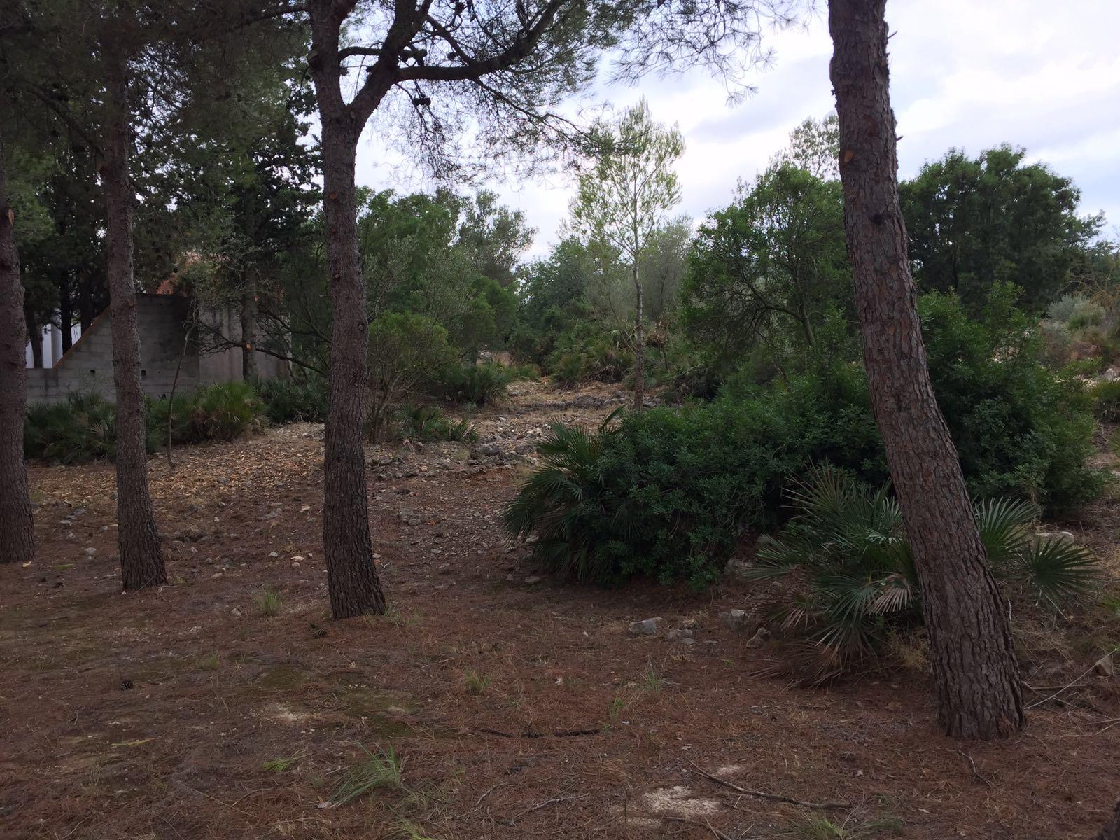 Santa Magdalena, acaben les feines de neteja de l'entorn de l'ermita de Sant Vicent