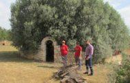 Sant Jordi participarà diumenge en les Jornades Europees del Patrimoni