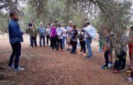 Sant Jordi, desenes de veïns participen en la ruta al voltant de les oliveres mil·lenàries
