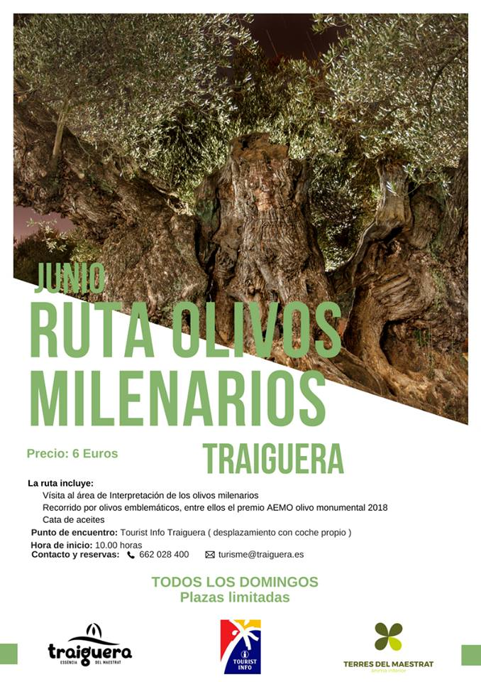 Traiguera oferirà tots els diumenges visites guiades a les oliveres mil·lenàries