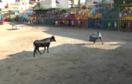 La Sénia, Vesprada de bous 24-08-2018