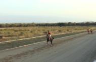 La Sénia celebra les tradicionals curses de cavalls en motiu de les Festes Majors