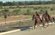 La Sénia, 3º Día de Cursa de Cavalls i burros 24-08-2019