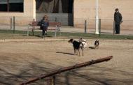 Benicarló; Visita al parc caní del carrer de Mariano Miquel i Polo de Benicarló 30-01-2020