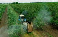 La Comissió Europea prohibeix el clorpirifós i el metil clorpirifós però els productes agrícoles importats podran continuar entrant en els mercats de la UE amb eixes substàncies actives