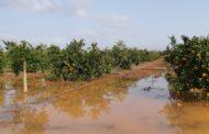 FEPAC-ASAJA avalua els efectes de les pluges en el camp de la província