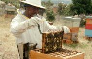 Agricultura destina 1,4 milions d'euros per a la millora de les condicions de producció i comercialització de la mel
