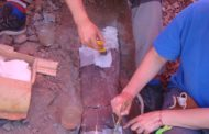 Noves restes de dinosaures sauròpodes a Morella