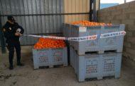 La Policia de la Generalitat participa en els operatius de robatoris i comerç il·legal hortofructícoles