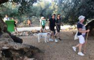 Canet lo Roig reorganitza les rutes pels olivars i es faran d'agost a octubre