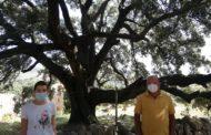 La Diputació completa el repartiment de panells informatius que posen en valor arbres monumentals de la província