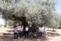 Tírig celebra la festivitat de Sant Jaume