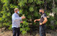 L'Ajuntament de Sant Jordi augmenta la vigilància en el camp per a evitar els robatoris de garrofes