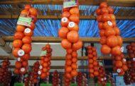 Alcalà-Alcossebre dedicarà l'octubre a la tomata de penjar amb activitats gastronòmiques i turístiques