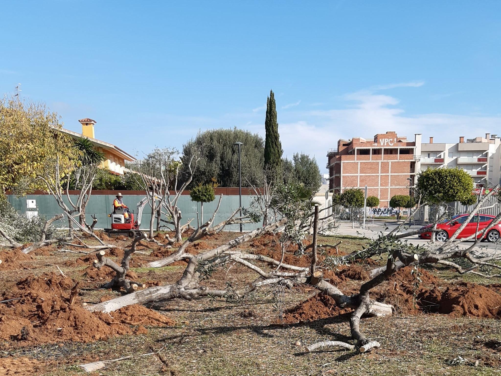 L'àrea de Medi Ambient de Benicarló transformarà una parcel·la de 3.000 metres quadrats en un parc verd