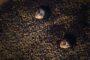 FernandoAdell guanya el Concurs Fotogràfic 'La recollida de les ametles a Albocàsser 2020'