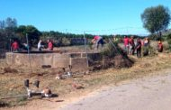 Neteja de l'entorn de la bassa Redona de Benicarló