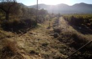 La brigadaEMERGEesbrossa el barranc que uneix la rambla d'Alcalà amb el 'Mas de Pinyó' de Santa Magdalena