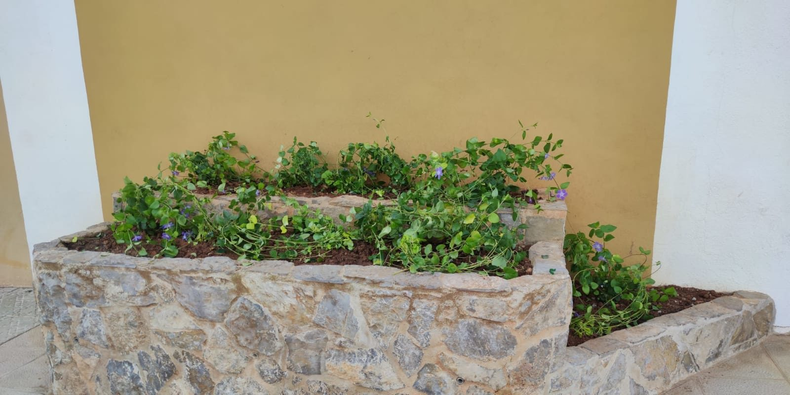 Peníscola millora la jardineria del municipi