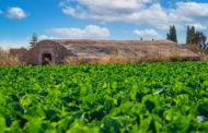 El Ple de Benicarló aprova regular l'ús agrícola de fangs procedents de la depuració d'aigües residuals