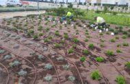 Benicarló posa a punt els parcs, jardins i zones verdes de la ciutat