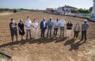 La Diputació amplia la subvenció a la D.O. Carxofa de Benicarló fins als 57.000 euros per a substituir plantons