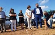 La Carxofa de Benicarló millorarà la seua qualitat vegetal gràcies al suport de la Diputació