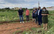 Martí demanarà al Govern ajudes i rebaixes fiscals per als agricultors afectats per la pedra