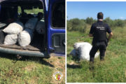 La Policia Local de Vinaròs sorprén tres persones que portaven 180 quilos de garrofes