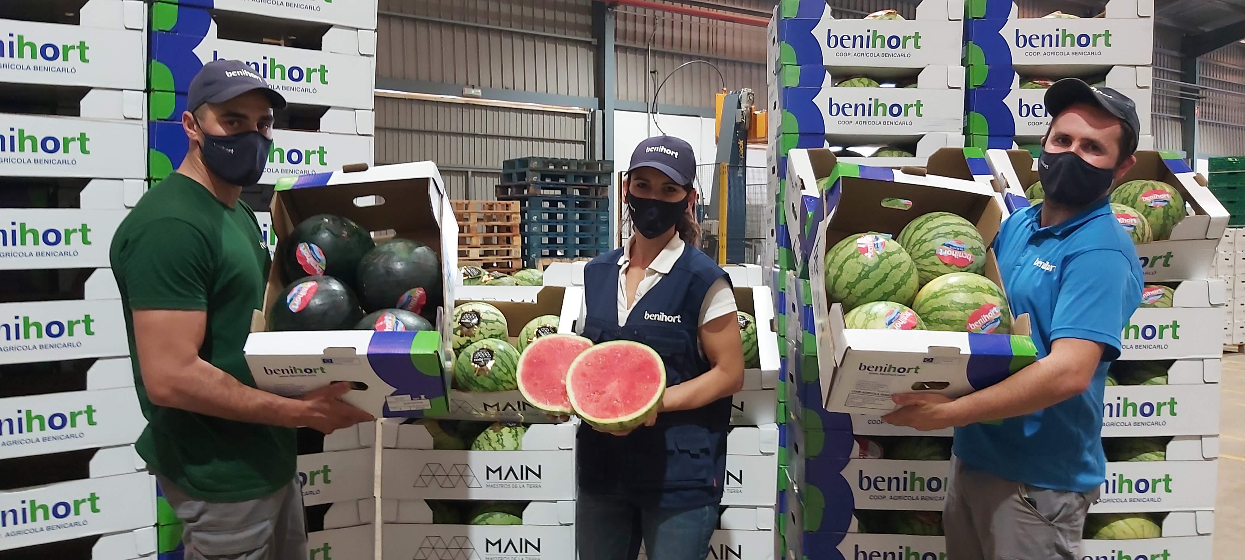 'Amarga campanya' de meló d'Alger 2021 per a la CooperativaBenihortde Benicarló