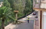 Santa Magdalena retira les palmeres afectades pel morrut roig i realitza el tractament per a evitar la propagació